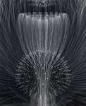 Murayama Macoto, Chrysanthemum-iii-b, 2008-2010, digital Print, Acryl, 56 x 45,7 cm