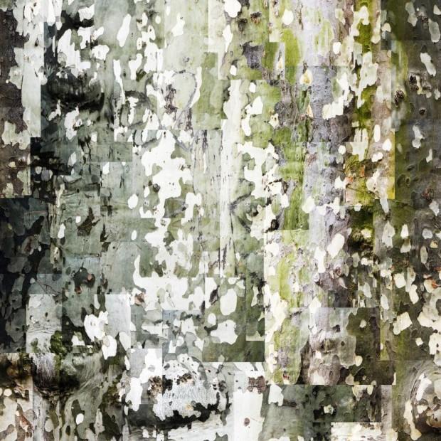 Dirk Brömmel, Platane, 2006, Diasec Aludibond 250x250cm, Ed.3